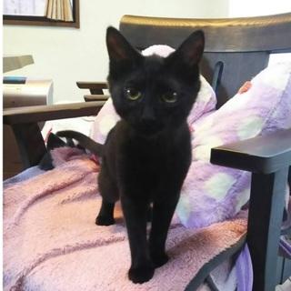 かわいい黒猫女子 6か月
