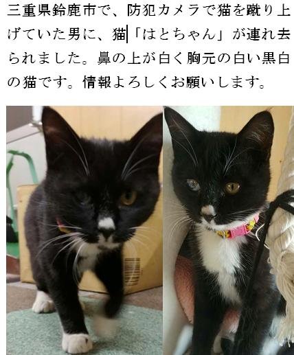 猫 殺害 動画