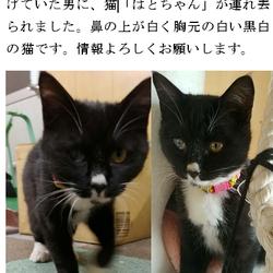 0323再追記有 鈴鹿 猫虐待連れ去り拡散・情報
