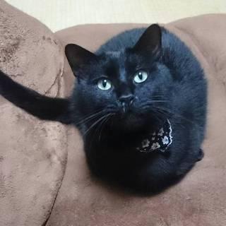 元気いっぱいの黒猫の男の子です!