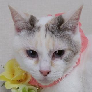 3/24田原町★ももちゃん★青い瞳の美魔女