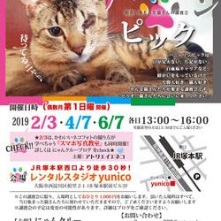 4月7日第14回パニャリンピック―障害猫さんの譲渡会