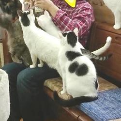 保護猫広場にいらしたお客さまと保護猫たち