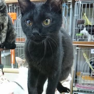 【お転婆ガールの黒猫のチッチちゃん】
