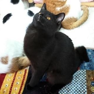 【尻尾が曲がっててかわいい黒猫のマッチ君】