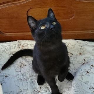 【尻尾の長い黒猫の亜美ちゃん】