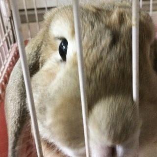 ウサギちゃんの里親募集
