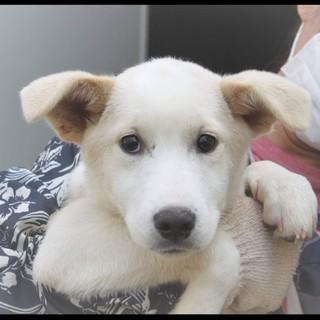 生後5か月仔犬 去勢手術済み!穏やか6キロ