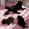 黒猫ちゃん里親募集