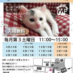 第84回保護猫たちの幸せ探し会