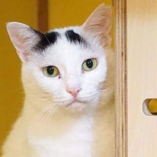 猫マニア向け?ツンツン華さま