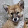 住民持込み…可愛い子犬3匹兄弟♡