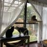うちにも遂に窓猫導入。でもまだ自分からは登ってくれない(T-T)