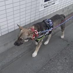 野犬くん、お散歩で~き~た~!!感動!