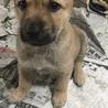 甘えん坊で可愛い男の子2か月 サムネイル3