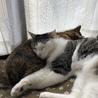 ミリもトゥトゥ姉大好きー。このぽわんぽわんの横っ腹を枕にお昼寝するの、サイコー。