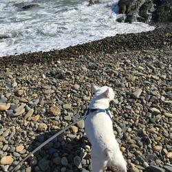 海にいったよ