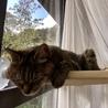 窓猫でとろけるトゥトゥ。まだ自分では乗らないですけど・・・(T-T)