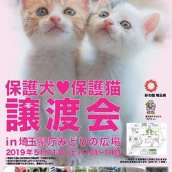保護犬☆保護猫譲渡会IN埼玉県庁