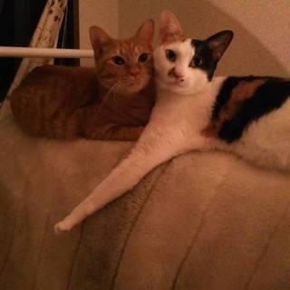 兄妹猫ちゃんの里親さん募集してます