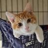 個性豊かな美形の猫の兄弟です!