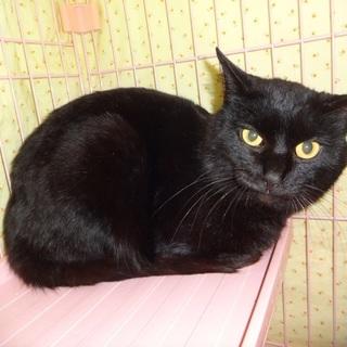 大きなイエローの瞳☆美黒猫