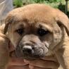 子犬約2ヵ月