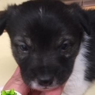 保護ナンバーD1322 ミックス犬 子犬
