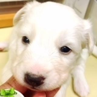 保護ナンバーD1323 ミックス子犬