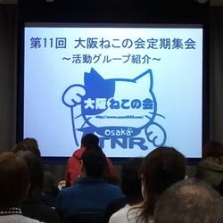 大阪ねこの会 定期集会報告