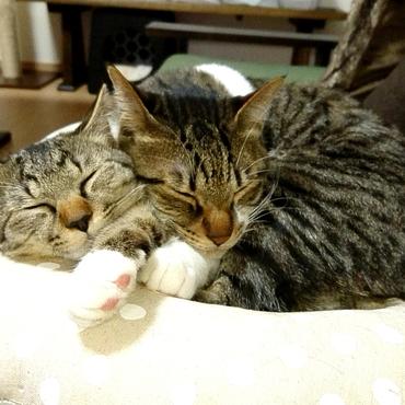 猫団子♥️