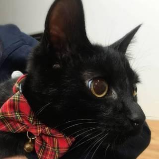 【3/31東日本橋】艶々の黒猫♡蔦くん