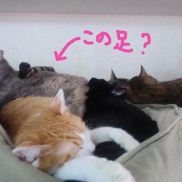 猫の寝相さまざまです
