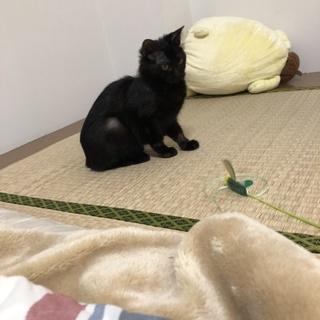 黒猫5.6ヶ月の女の子