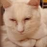 おっとりのんびりした性格の白猫ほわちゃん♀ サムネイル2