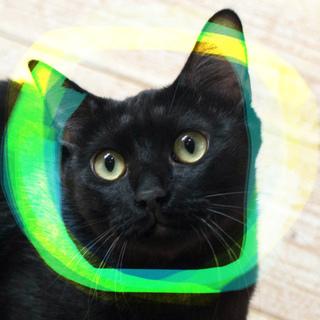 緑がかった金目、黒猫オス1歳、ホルス、ほまれ