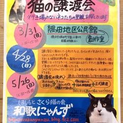 猫の譲渡会in橋本市♡ はしもとさくら猫の会 和歌にゃんず