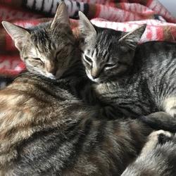 新しく家族になった猫ちゃん2匹