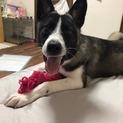 犬が大好き、お姉さんキャラのニコちゃん!