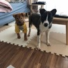 犬が大好き、お姉さんキャラのニコちゃん! サムネイル4