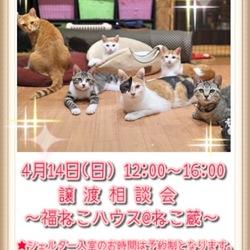 譲渡相談会〜福ねこハウス@ねこ蔵〜