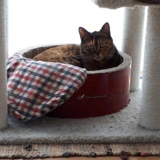 推定2〜3才のサビ色メス猫、ややブチャカワ?