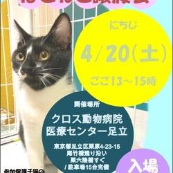 【参加猫動画有り】動物病院でのほごねこ譲渡会