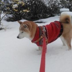 ☃季節外れの大雪☃