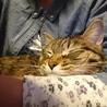 腕枕で、スヤスヤ