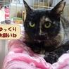 募集停止☆ゴロスリ☆恥ずかしがり屋のサビ猫 サムネイル5