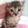 赤ちゃんキジサビさちちゃん授乳中