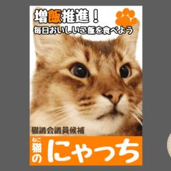 選挙に立候補したうちの猫たちです