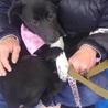 仮名 りさちゃん カラスに襲われていた野良犬の子犬