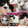 川越保護猫譲渡会★子猫、成猫★猫カフェタイプ